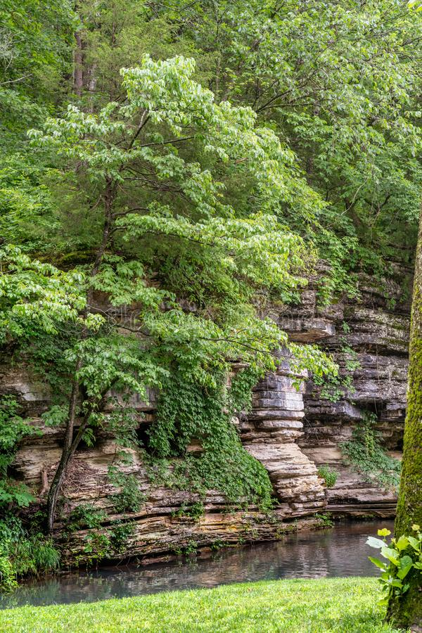 Verticle of canyon walls with stream of water. And summer foliage stock images