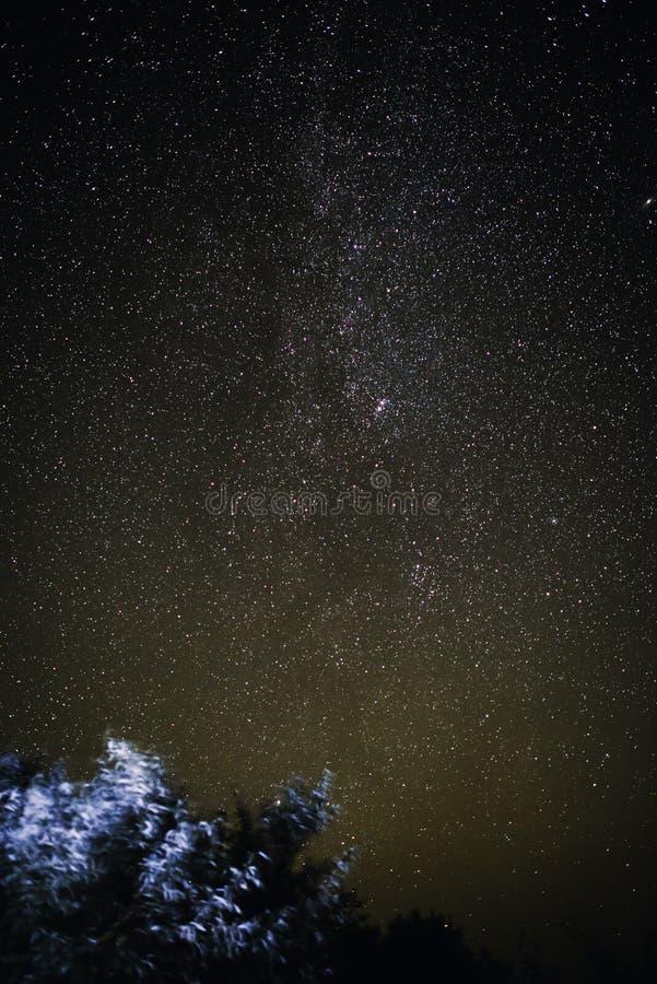 Vertikal bakgrund av ljus himmel för stjärnklar natt med ljus på på den och kontur av träd royaltyfria bilder