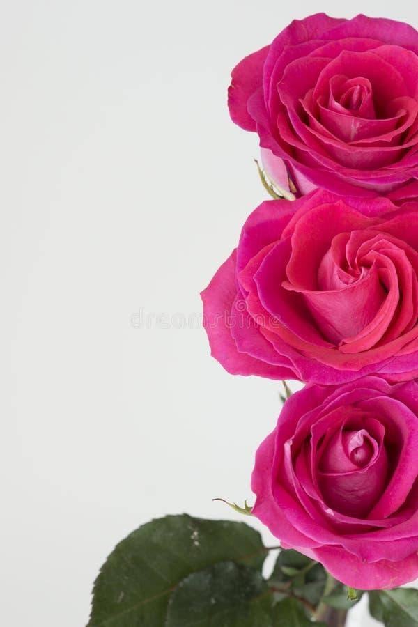 Vertikal bild med rad av rosa rosor på rätten arkivfoton