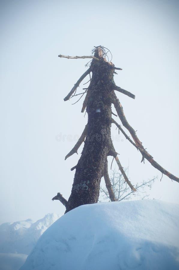 Vertikal bild som fokuseras på en död bokträdinloggning en dimmig dy arkivbilder
