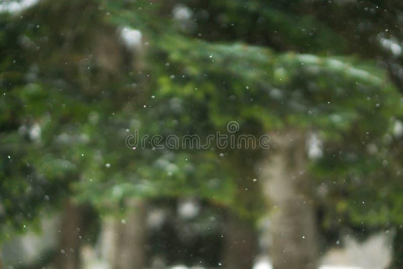Vertikal fallende wirkliche Schneeflocken, Schuss auf Kiefern, Bäume backgro lizenzfreies stockfoto