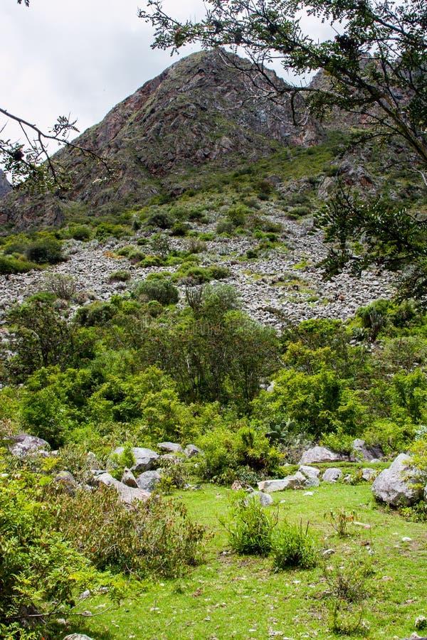 Vertikal sikt av den lösa Anderna djungeln royaltyfri foto