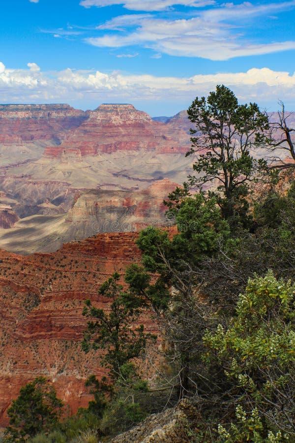 Vertikal sikt av Grand Canyon den södra kanten som inramas på en sida av träd fotografering för bildbyråer