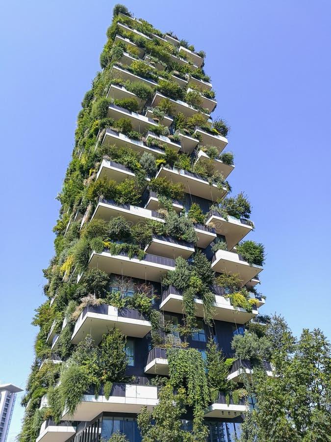 Vertikal skogbyggnad royaltyfri foto