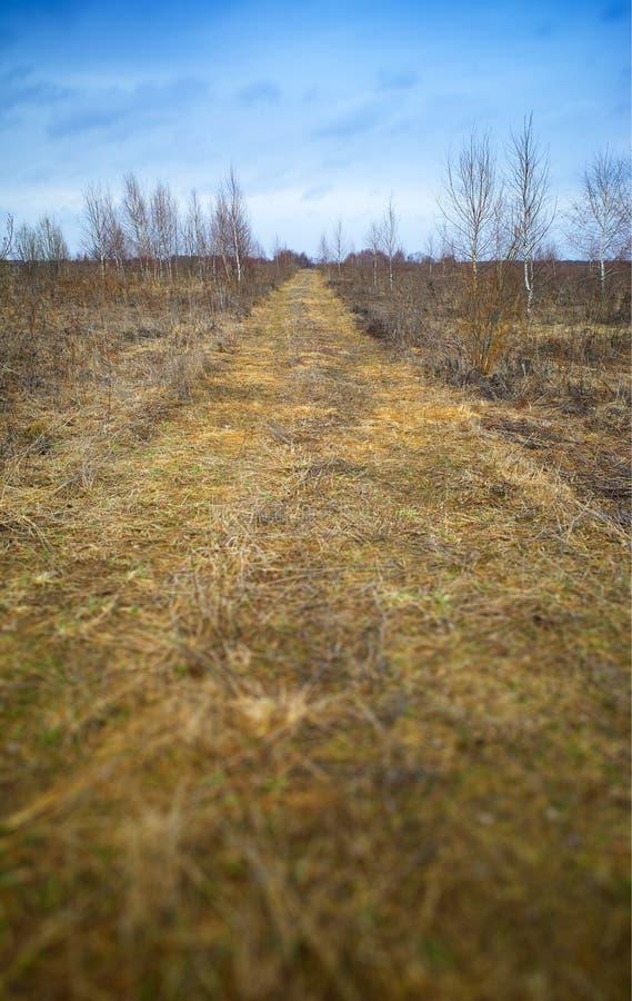 Vertikal tidig hd för bakgrund för vårvildmarklandskap arkivfoton