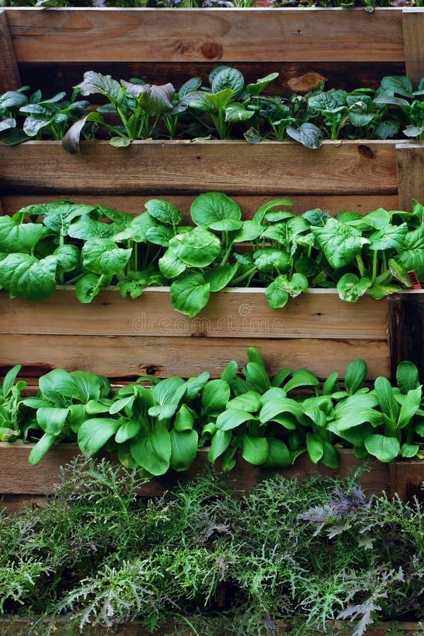 Vertikale Anlage, die für das Wachsen vieler Pflanzensorten in begrenztem Bereich bewirtschaftet stockfotos