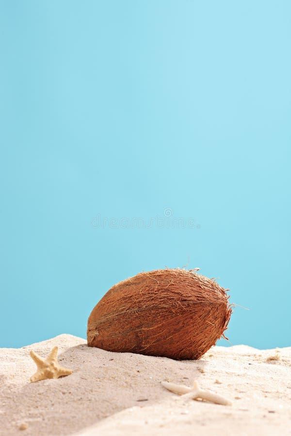 Vertikale Atelieraufnahme einer Kokosnuss im Sand lizenzfreie stockfotografie