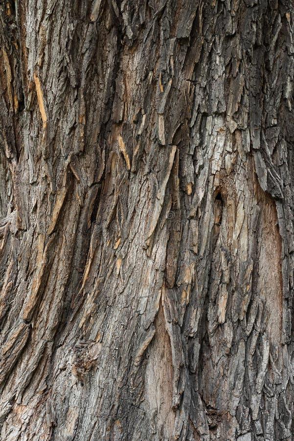 Vertikale Beschaffenheit des alten hölzernen hölzernen Eichenbarkenhintergrundes stockfotos