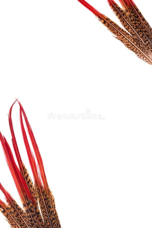 Vertikale der Hintergrund Das Vogel ` s versieht als Bilderrahmen mit Federn stockbilder