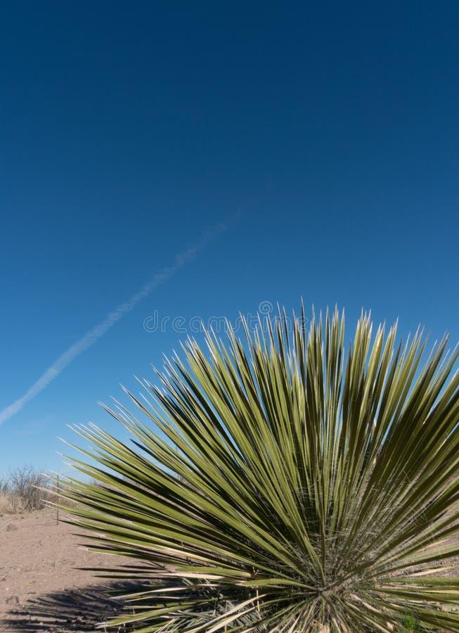 Vertikale einer südwestlichen Yuccaanlage und des blauen Himmels stockbild