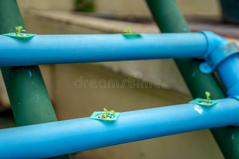 Vertikale hydrophobe Landwirtschaftsstruktur in der organischen Gartenarbeit im Freien stockfotografie