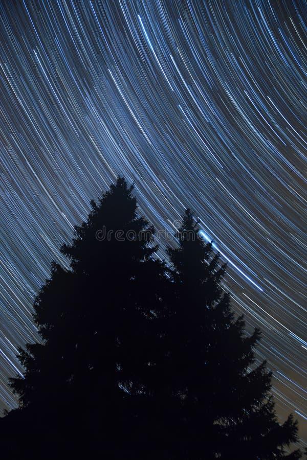Vertikale Landschaft des Sternes schleppt über den dunklen Kiefern lizenzfreies stockbild