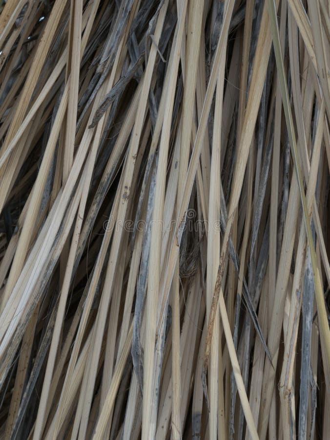 Vertikale nah oben von einer Yuccaanlage in Süd-Arizona stockfotos