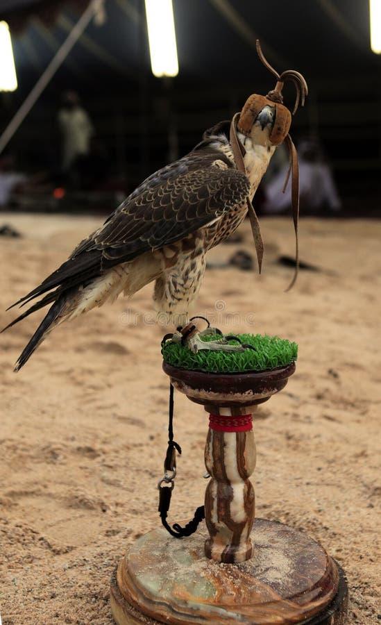 Vertikale Seitenansicht des Falken lizenzfreie stockfotos