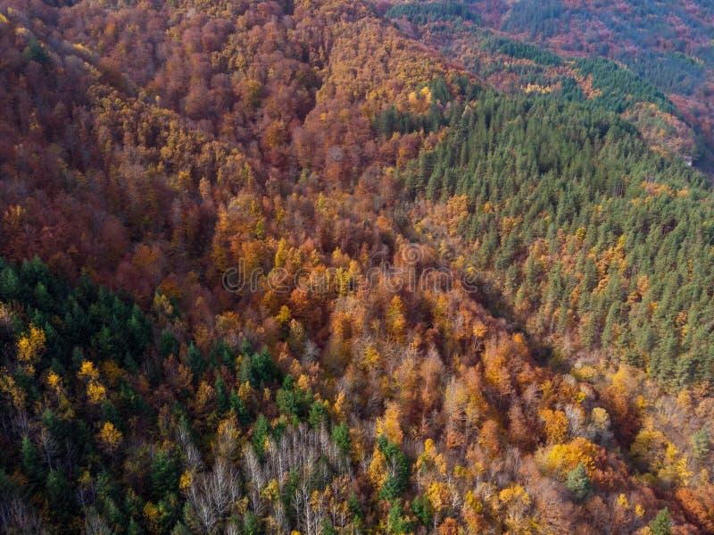 Vertikale von der Luftansicht des Herbstwaldes lizenzfreie stockfotografie