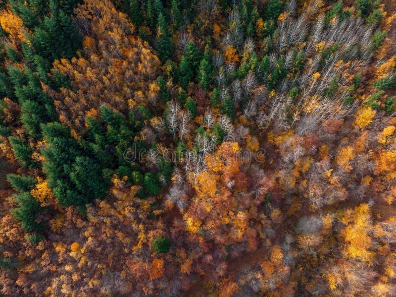 Vertikale von der Luftansicht des Herbstwaldes stockbilder