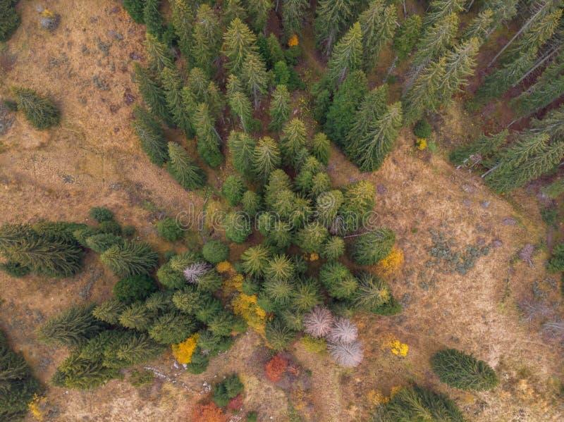Vertikale von der Luftansicht des Herbstwaldes lizenzfreie stockfotos