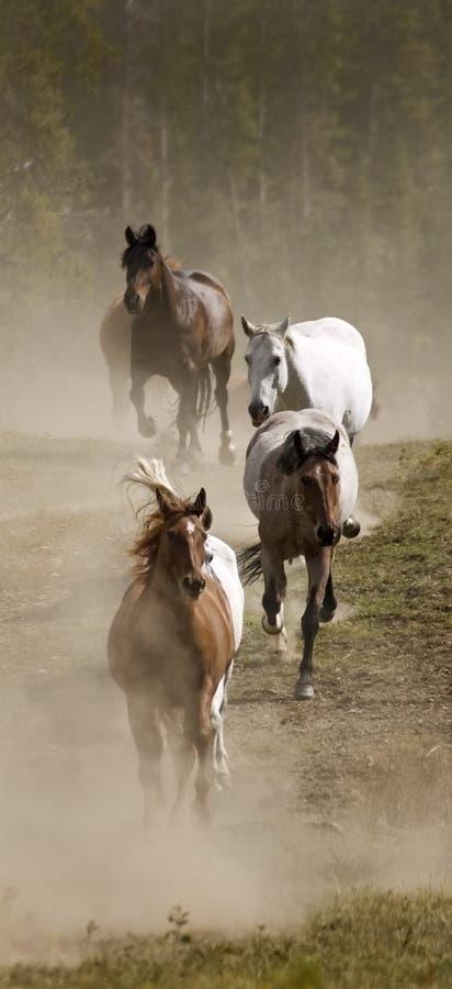 Vertikale Zeile der Pferde und des Staubes lizenzfreie stockfotografie