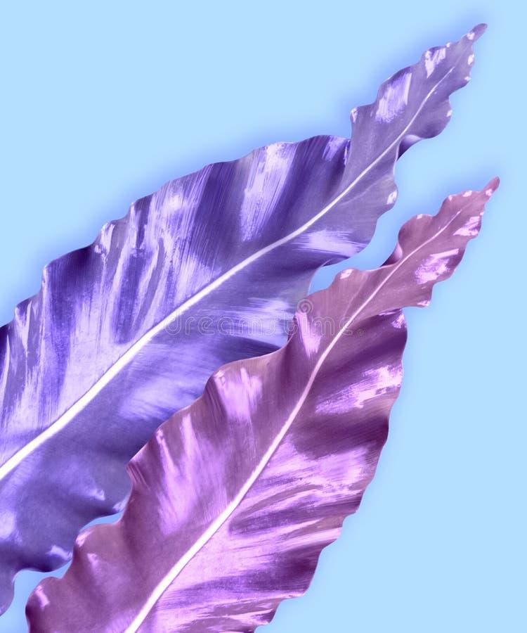 Vertikaler Einladungskartensatz mit tropischen Blättern stockfotos
