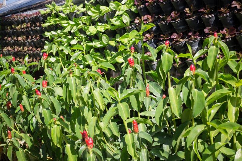 Horizontaler Garten vertikaler garten der grünen gemüsewand stockfoto bild