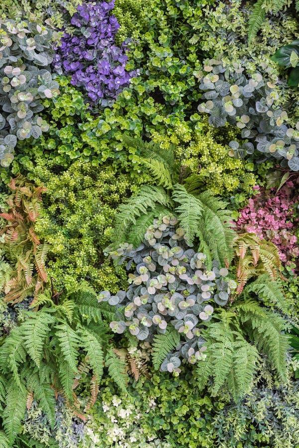 vertikaler Gartenwandhintergrund stockbild