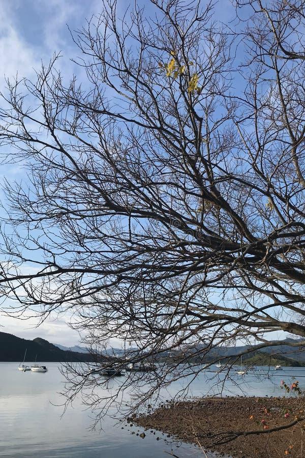 Vertikaler Naturlandschaftsphotographiebaum und -see im Winter stockbild