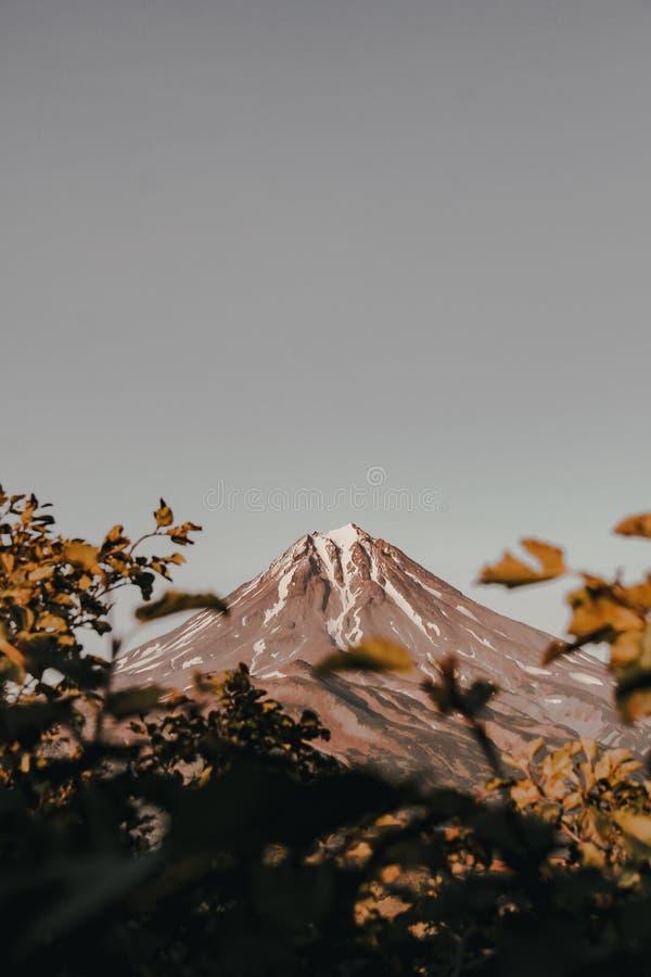 Vertikaler Schuss eines schönen schneebedeckten Berges schoss von einem Wald mit Blättern herum stockbilder