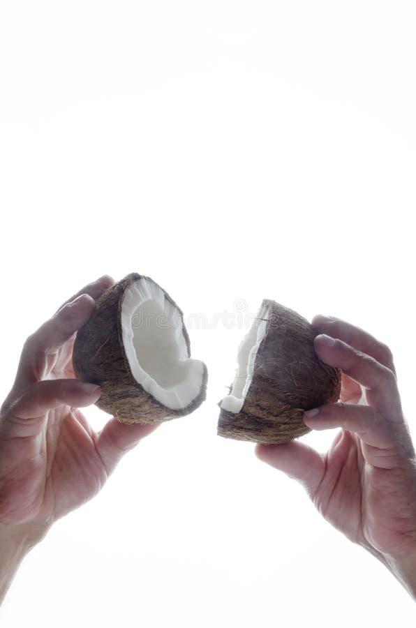 Vertikaler Schuss von halfs Kokosnüssen in den männlichen Händen auf weißem Hintergrund stockfotos