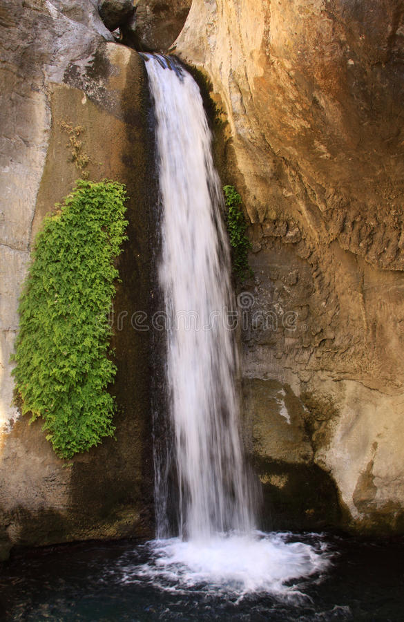 Vertikaler Wasserfall mit Grünpflanzen auf der Seite stockfotos
