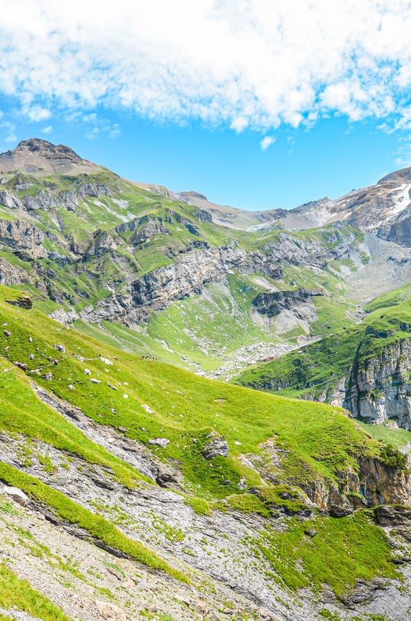Vertikales Bild der erstaunlichen Alpenlandschaft, fotografiert an sonnigen Tagen Grüne Weiden auf felsigen Bergen Schöne Schweiz lizenzfreie stockfotos