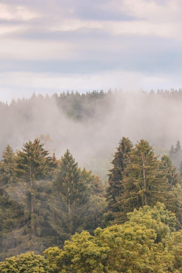Vertikales Bild der nebeligen Fallwaldlandschaft fotografiert am frühen Morgen Schwermütige Landschaften Herbsthintergrund, nebel lizenzfreie stockfotos