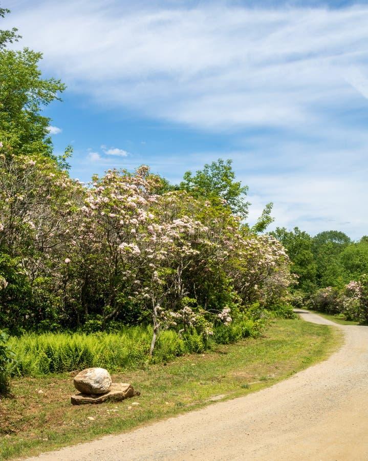 Vertikales Bild des Berges Laurel Sanctuary im Verband, Connecticut lizenzfreie stockfotos