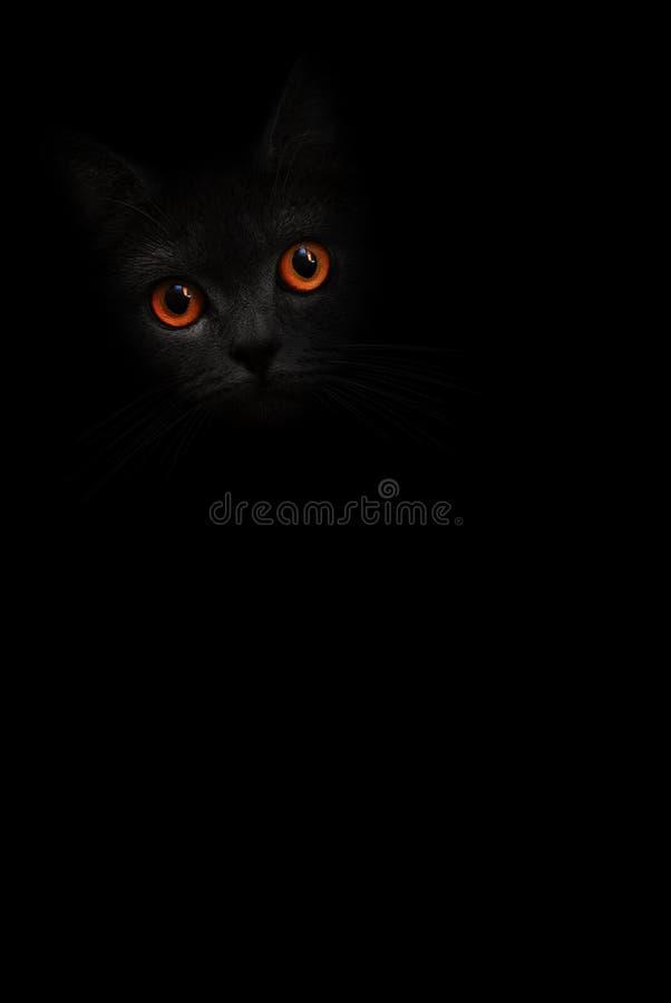 Vertikales Porträt der schwarzen Katze des Bildes mit orange Augen schaut aus dem Schatten auf dem schwarzen Hintergrund heraus N lizenzfreies stockbild