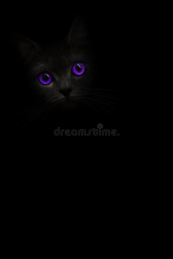 Vertikales Porträt der schwarzen Katze des Bildes mit violetten purpurroten Augen schaut aus dem Schatten auf dem schwarzen Hinte stockbilder
