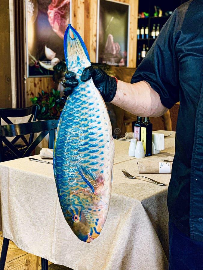 Vertikalt closeupskott av en manlig kocks hand som rymmer en blå stor fisk på en utsmyckad restaurang arkivfoton