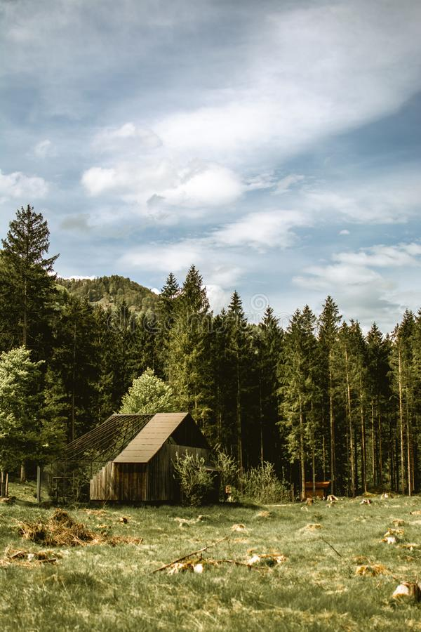 Vertikalt skott av en härlig skog med högväxta träd och lite trähuset som byggs nära träd arkivfoton