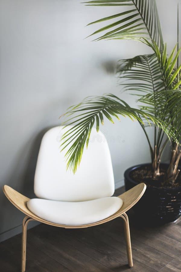 Vertikalt skott av en vit trästol och en lång tropisk växt i en kruka royaltyfri fotografi