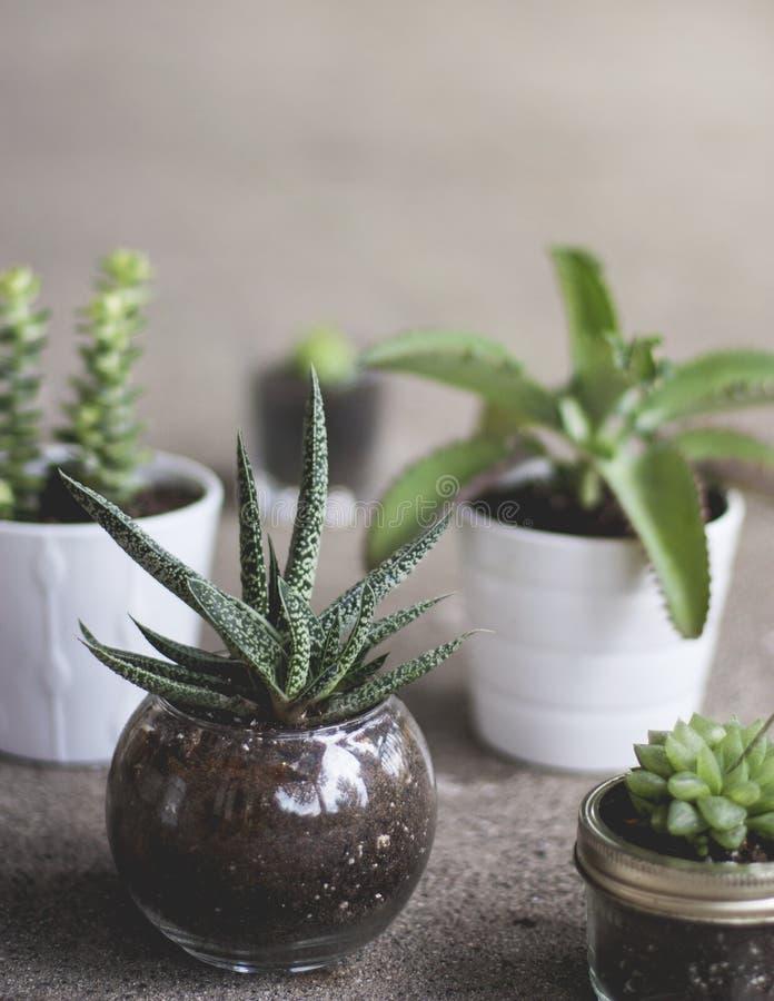 Vertikalt skott av olika växter i olika krukor arkivfoto