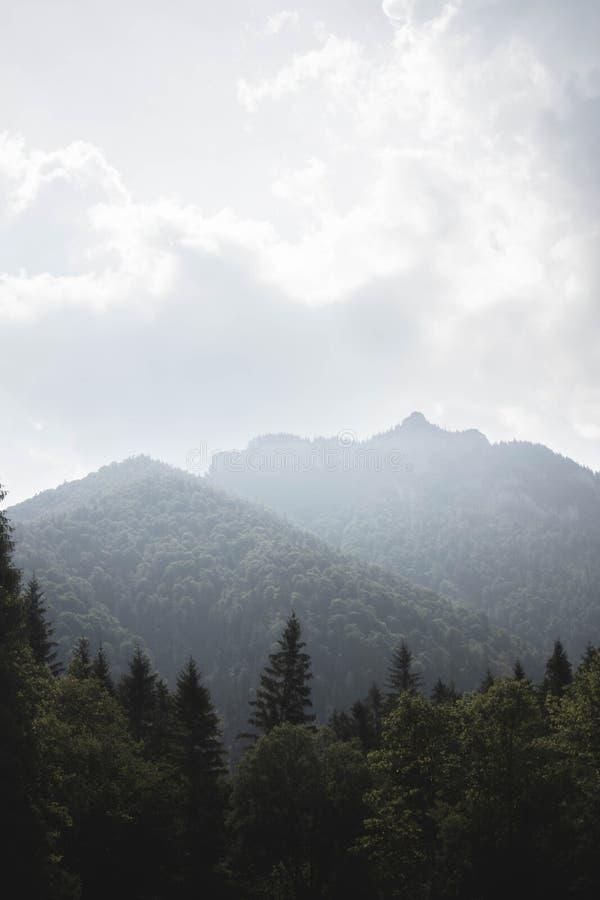 Vertikalt skott av träd med det forested berget och molnig himmel i bakgrunden vektor illustrationer