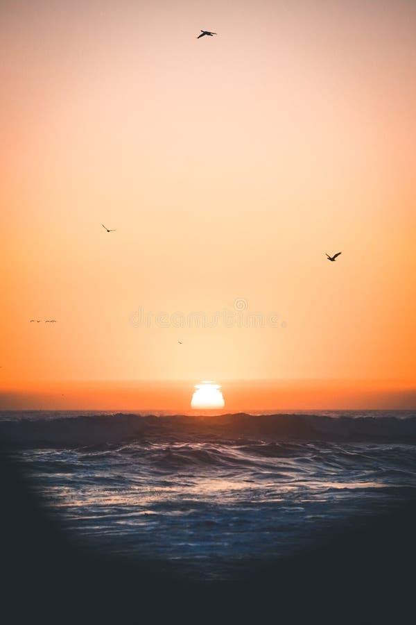 Vertikalt skott av vågor av havet och fåglarna som flyger över det på solnedgången i den centrala Kalifornien kusten arkivfoton