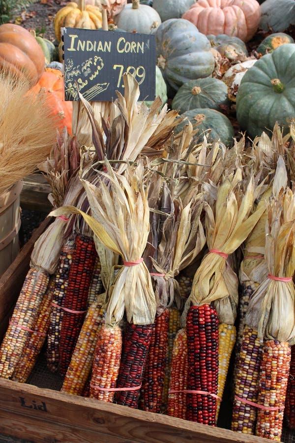 Vertoning van pompoenen, pompoen en maïs op lijst bij markt stock afbeelding