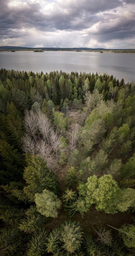 Vertorama di un paesaggio con un lago e una foresta immagine stock