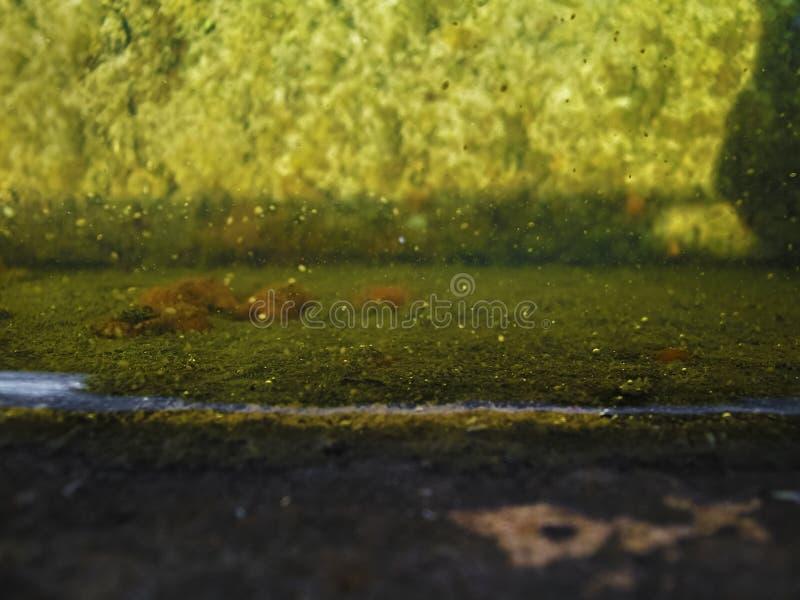 Vertraulich Wand wässern stockbilder