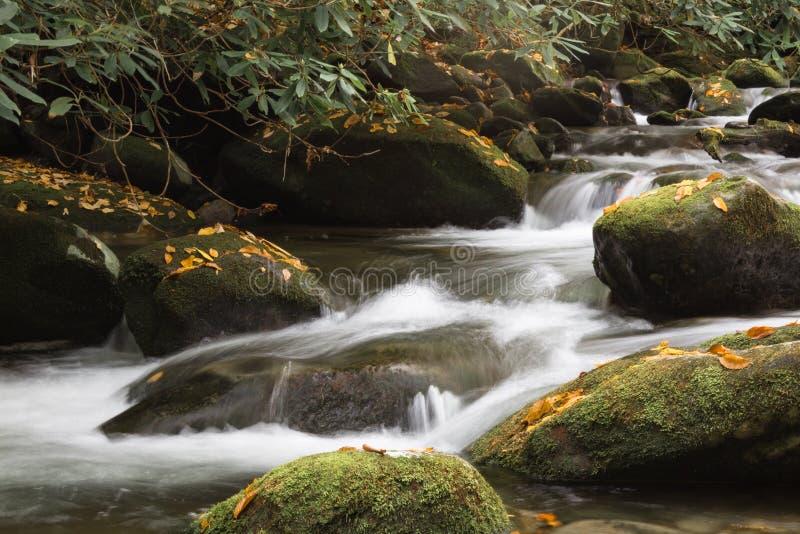 Vertraute Berglandschaft mit Wasser, das über Moos fließt, bedeckte Felsen mit Fallblättern, Rhododendren lizenzfreie stockbilder
