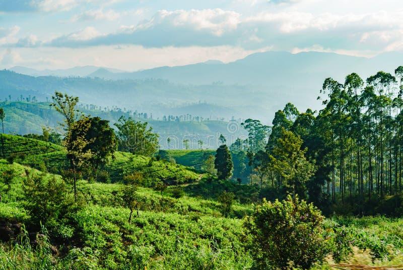 Verts de ciel de montagnes de plantations de thé de Sri Lanka photo stock