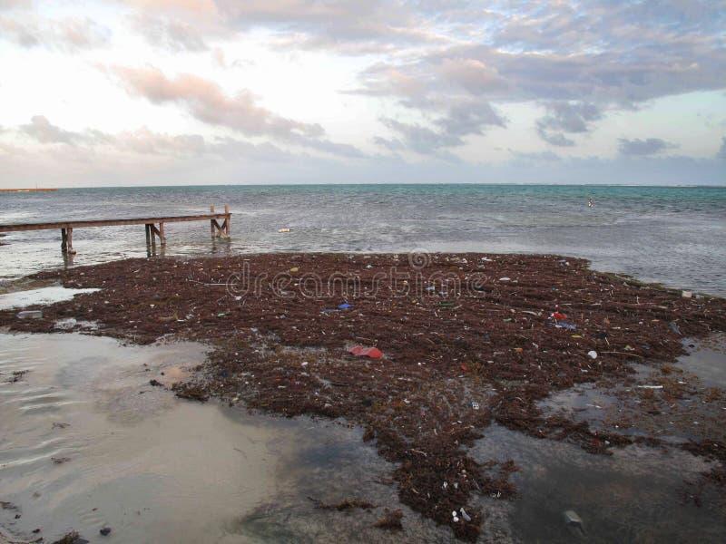 Verunreinigung u. Abfall, die entlang das Ufer schwimmen lizenzfreie stockfotografie
