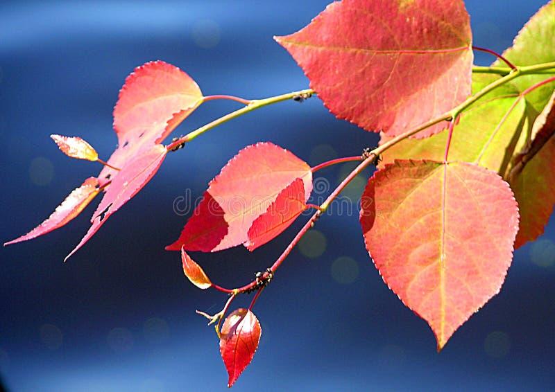 Verven van de herfst royalty-vrije stock afbeelding