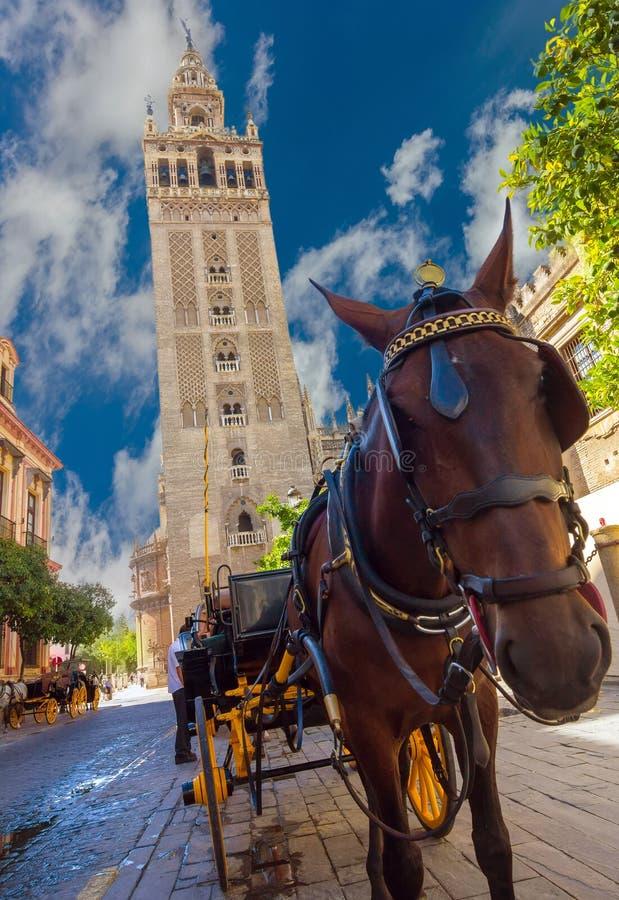 Vervoer met paard naast beroemde Giralda in Sevilla, Spanje stock foto