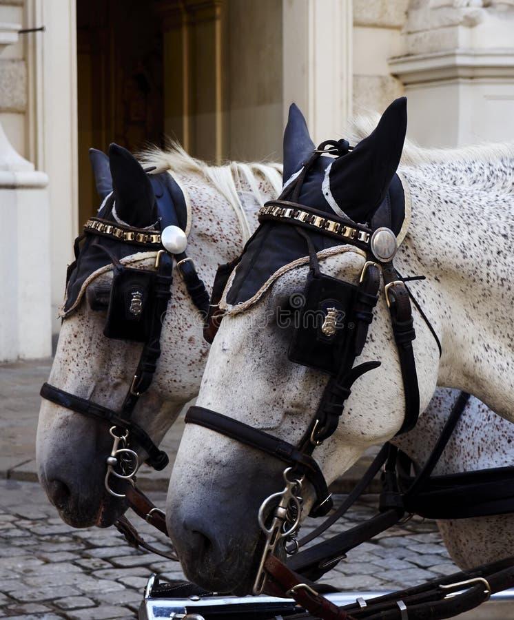 Vervoerpaarden stock afbeelding