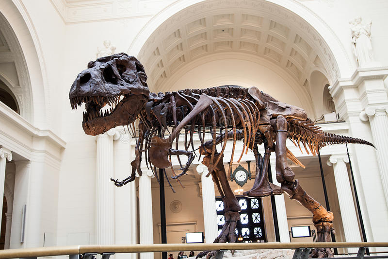 Vervolg t-Rex stock foto